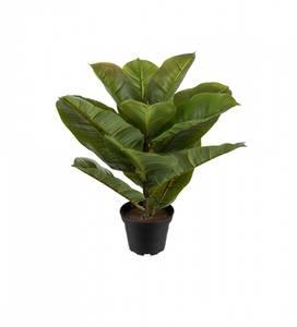 Bilde av Mr. Plant - Fikus Robusta 30 cm